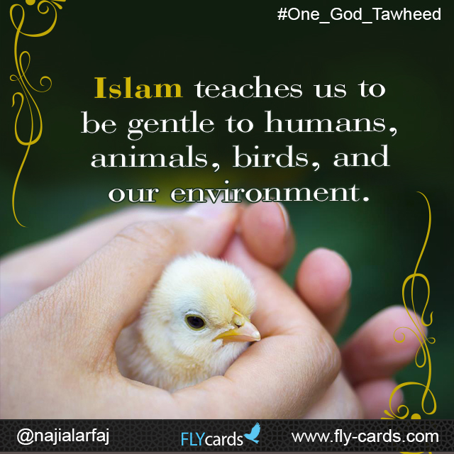 Islam teaches us to be gentle to humans, animals, birds, and our environment.