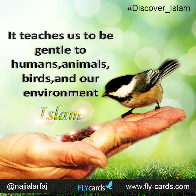 It teaches us to be gentle to humans , animals birds and our environment . islam
