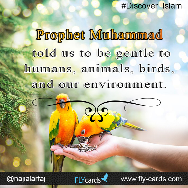 Prophet Muhammad  Told us to be gentle to humans , animals birds and our environment