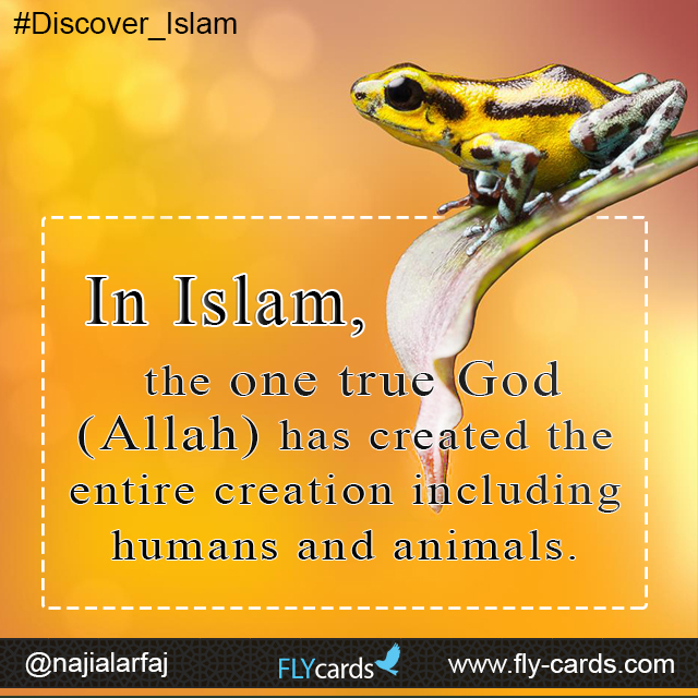 In Islam, the one true God (Allah) has created the entire creation including humans and animals.